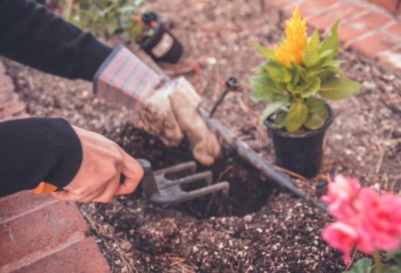 Dig deep and unearth your inner gardener