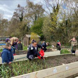 Children watering plants at the allotment